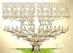genealogie3